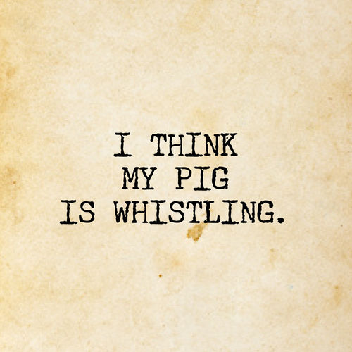 pig is whistling